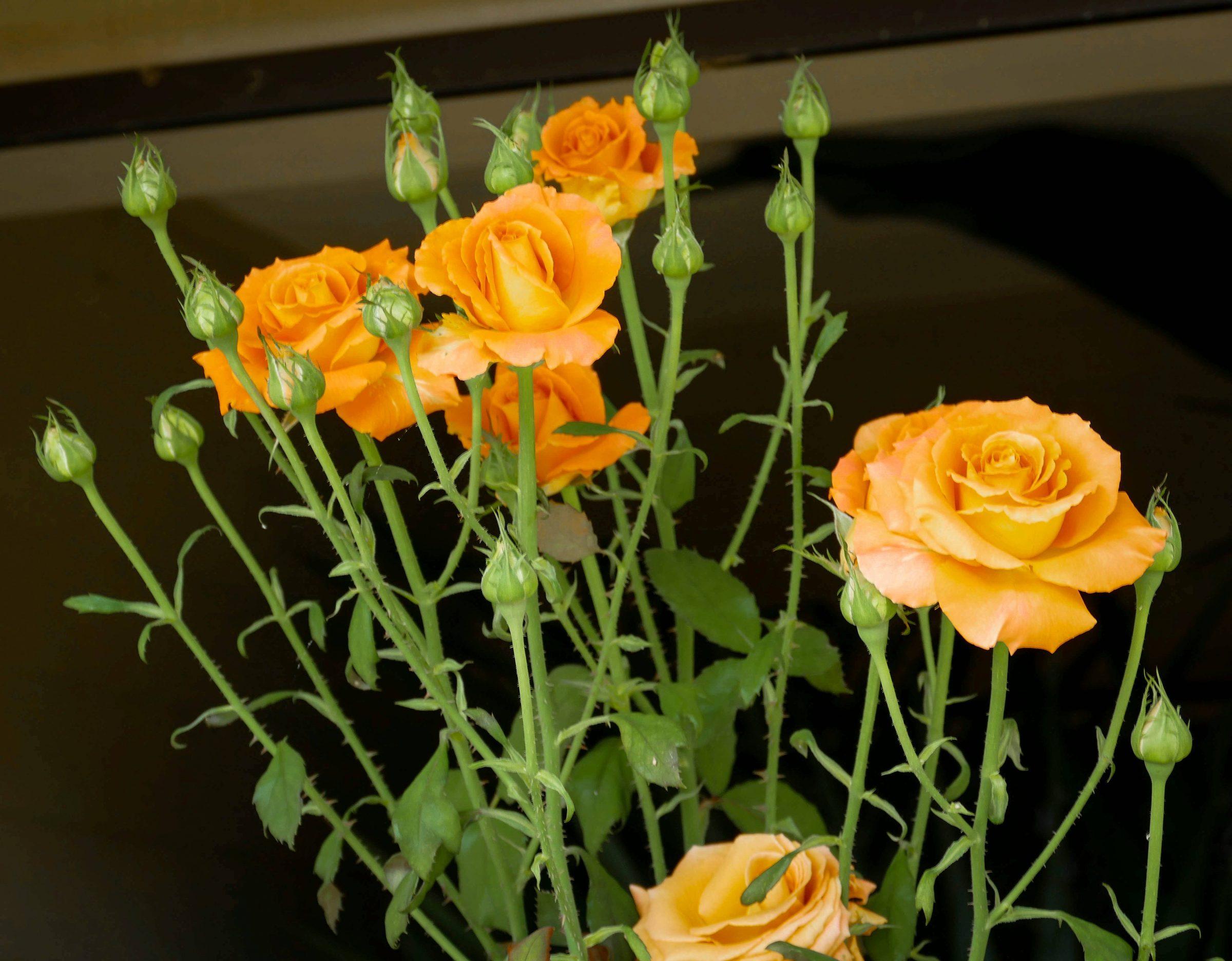 Are You a Flower Goddess Katherine Chloe Cahoon G