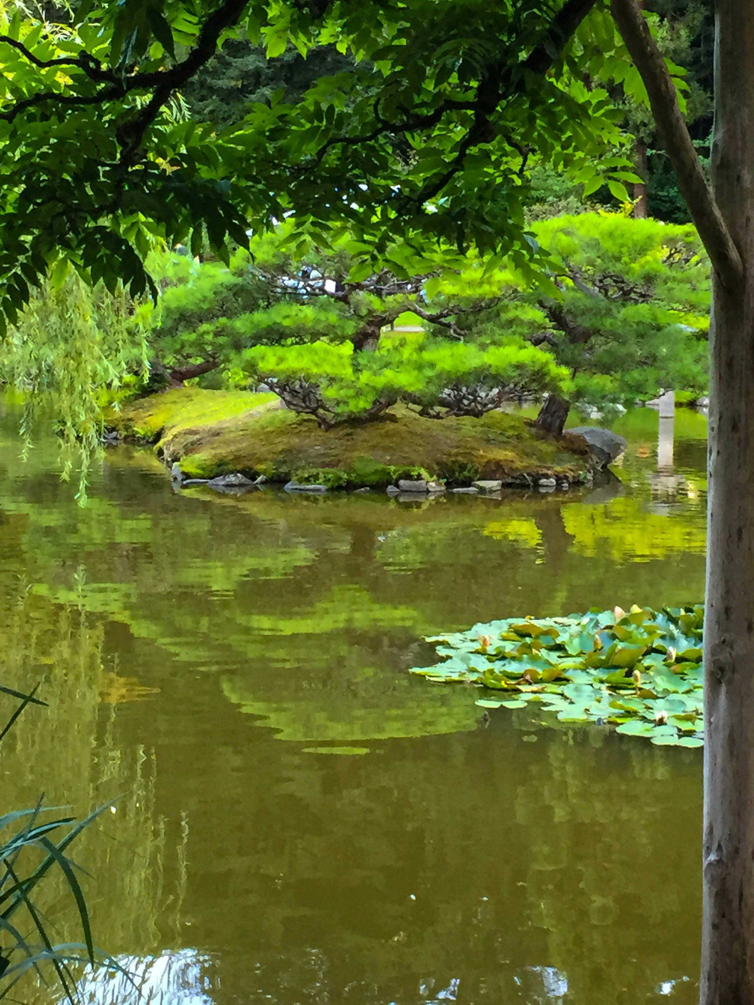 Japanese Garden Soirée C